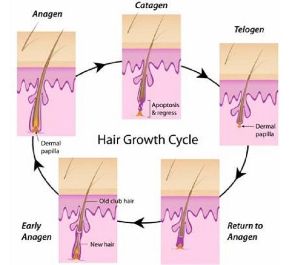 tẩy lông chân vĩnh viễn thể mọc lại không